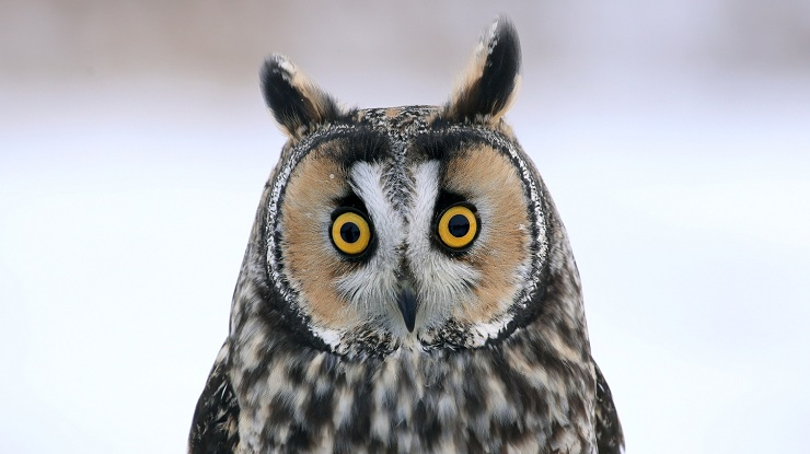 Tawny owl or long-eared owl: Which is more valuable for managing digital transformation?