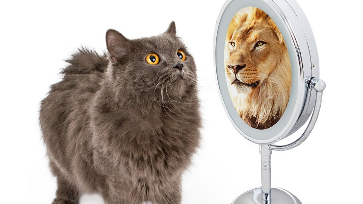 Conceptual data modelling : a cat is a cat